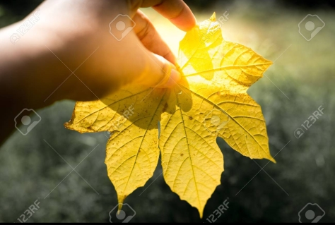 A hand holding a yellow leaf with green background,Yellow of leaf in autumn